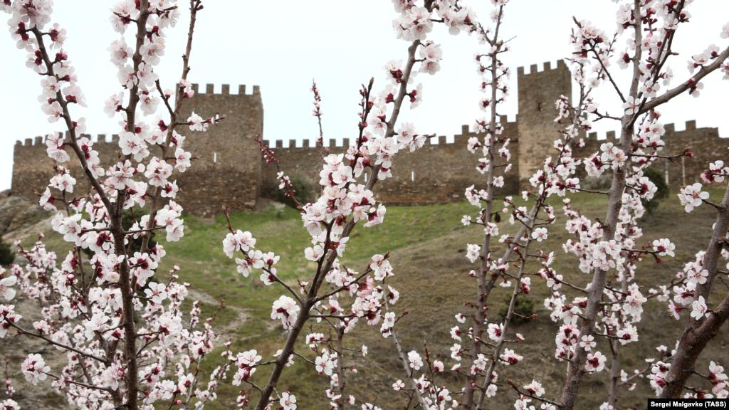 Багатовікова фортифікаційна споруда Генуезької фортеці є головною визначною пам'яткою Судака. На її території в останні роки щоліта проходить лицарський фестиваль «Генуезький шолом»