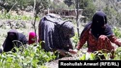 افغان مېرمنې