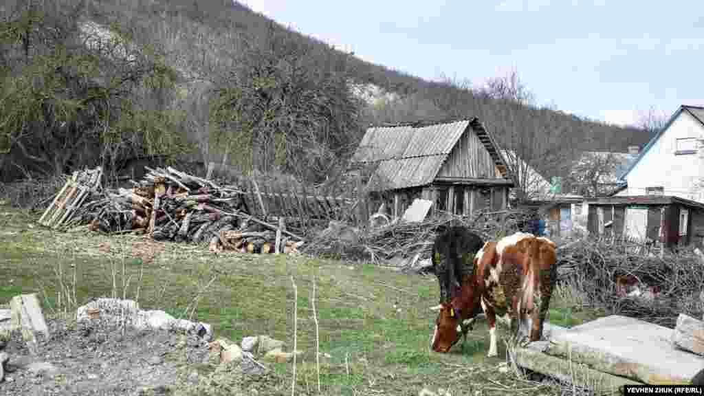 Біля дерев'яного сараю пасуться корови