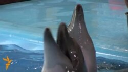 Donetsk Dolphins, War Evacuees