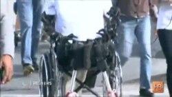 Гуманоид Афина стал первым в мире роботом-авиапассажиром