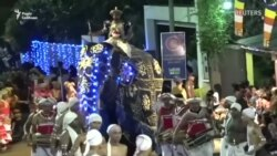 Слони накинулися на людей під час свята на Шрі-Ланці (відео)