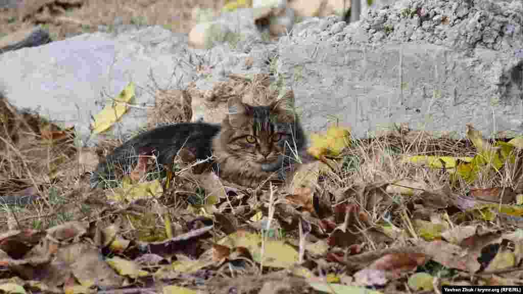 Среди опавших листьев отдыхает суровый кот
