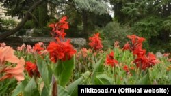 Виставка канн у Нікітському ботанічному саду, вересень 2021 року