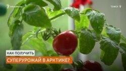 Сибирские ученые придумали, как выращивать овощи в Арктике