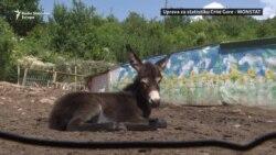 Zaštita magaraca u Crnoj Gori od nestanka