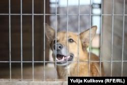 """Собака приюта """"Дом хвостиков"""", Выборгский район"""