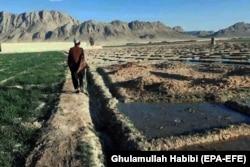Uzgoj opijumskog maka u afganistanskoj provinciji Helmand, mart 2021.