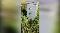 Массовая гибель пчел в Татарстане