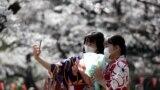Cvjetanje trešnjinog drveta u Japanu, 23. mart