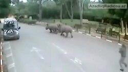 Gözətçinin yatmağından istifadə edən kərgədanlar zooparkdan qaçır