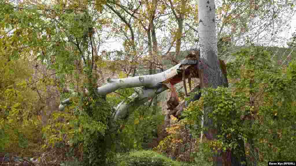 Від зростаючої біля річки тополі відламалася величезна гілка