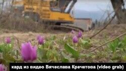 """Краснокнижные растения в зоне работы экскаватора разреза """"Кузнецкий Южный"""""""