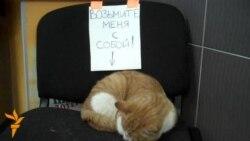 Такое жыцьцё: Кот і людзі