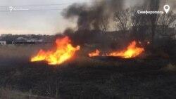 Пожар на окраине Симферополя: горят камыши (видео)