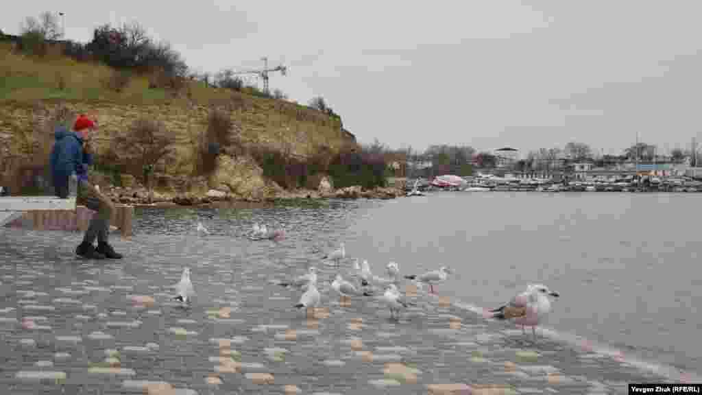 Чайки відпочивають на березі