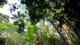 Erdő a Fülöp-szigeteki Palawan-szigeten fekvő El Nido üdülőhely közelében. Egy helyi civilszervezet szerint elképesztő méreteket öltött az illegális fakitermelés.