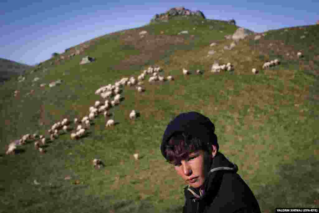 Borjan Balje watches the family's flock graze.