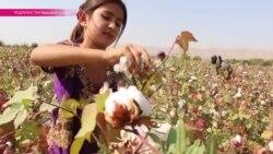 Черный труд таджикских сборщиков хлопка