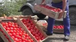 Rusiyanın pomidor və alma qadağası
