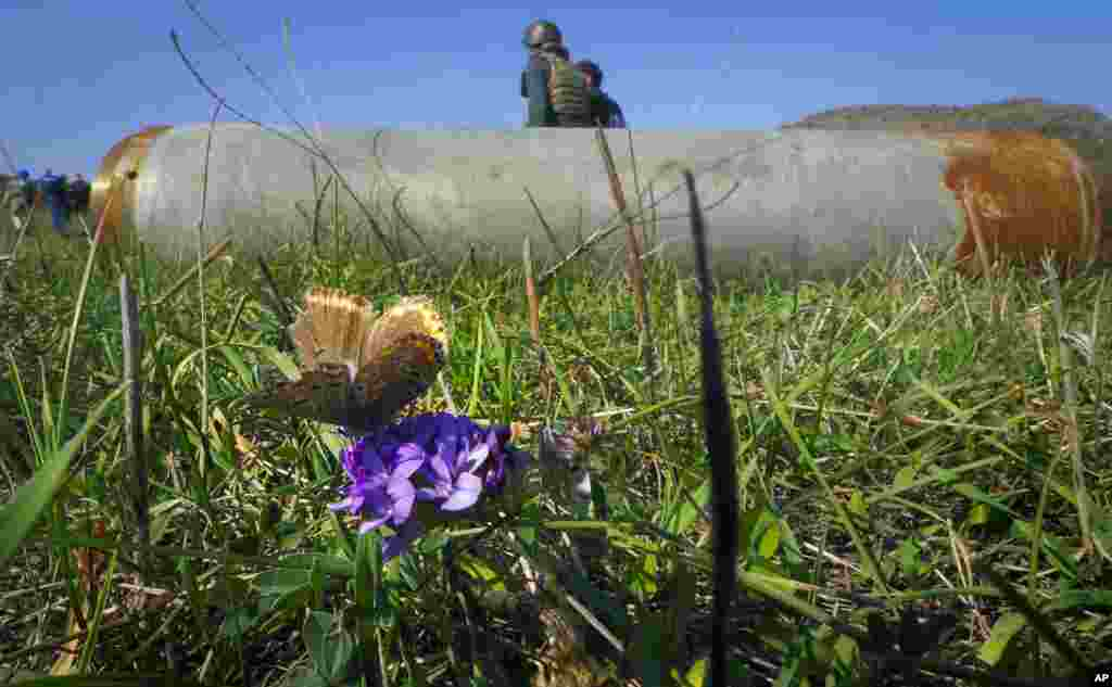 A butterfly sits on a flower near a fragment of a rocket after shelling near Stepanakert in Nagorno-Karabakh. (AP)