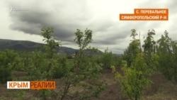 Как крымчане выращивали фрукты без воды? | Крым.Реалии ТВ (видео)