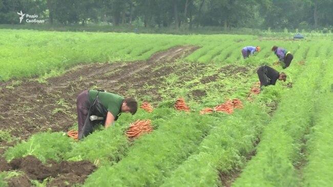 Чеські фермери оплачують заробітчанам з України тести на COVID-19 – відео