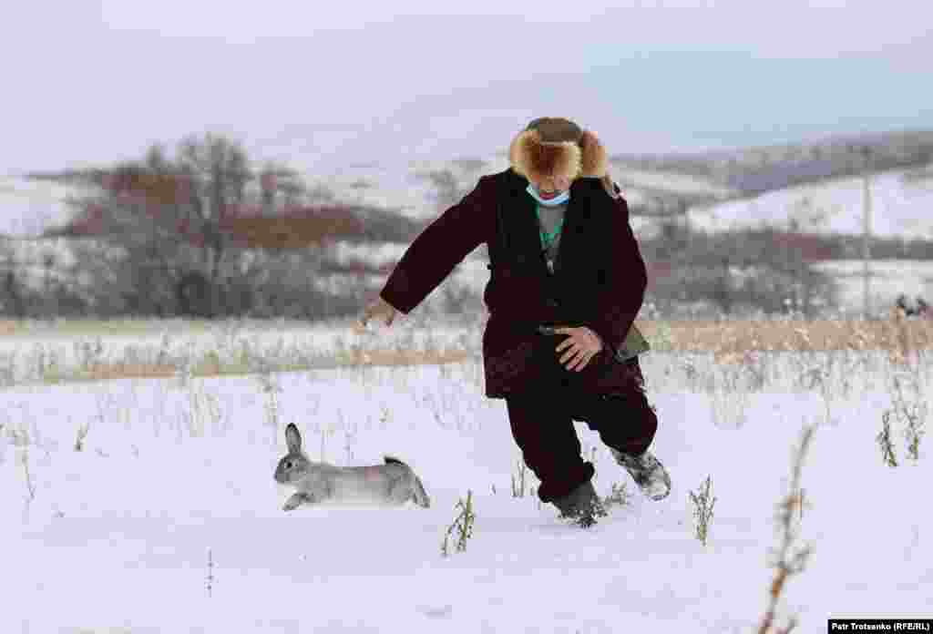 Ако птицата не го најде својот плен самостојно, учесниците на турнирот мора да ја уловат и да ја вратат во кафезот, како зајакот на оваа фотографија. Ако птица успее да фати животно, сопственикот обично се обидува да го одржи во живот.