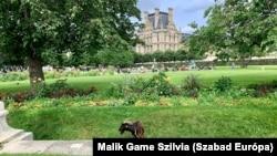 Kecske legel a Tuileriák kertjében 2021. július 14-én