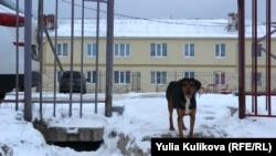 Бездомная собака в Коми