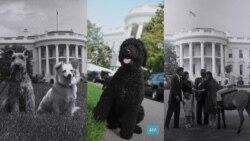 Если у вас нет собаки: как питомцы влияют на рейтинг президентов США