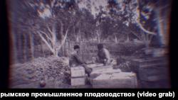 Крымские татары собирают урожай яблок и груш в саду-чаире. Крым, 1930-е годы