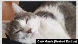 A Szabad Európa igazgatójának macskája igencsak jól érzi magát gazdája ölében.