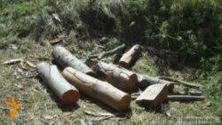 Ավելացել են ապօրինի անտառահատման դեպքերը