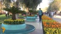 بغداد ثقافة وزهور