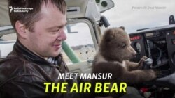 Saving Mansur The Air Bear