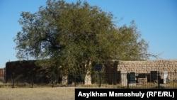 Талдыбейіт. Бөкейхан әулетінің қорымы. Қарағанды облысы, Ақтоғай ауданы. 25 қыркүйек 2021 жыл