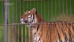 Visitors Warn Of Mistreatment Of Animals At Kyrgyz Zoo