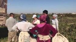 Түркістан облысындағы өзбек терімшілері