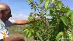 Կառավարության որոշումը Արմավիրի մարզի գյուղերում կռիվ է գցել