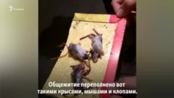 О чем мечтают жители общежития, переполненного крысами и клопами