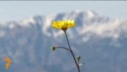 Цветение Долины смерти