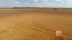 Украина смотрит на Африку