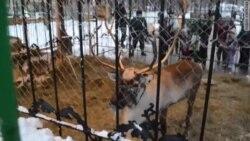 В защиту оленя Рудольфа