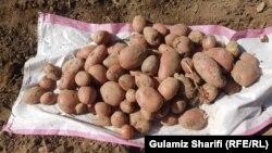 حاصلات کچالو در افغانستان