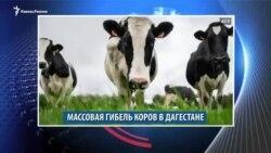 Видеоновости Кавказа 30 января