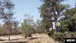 Behesht Zahra Cemetery, Plot 41