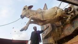 Азия: дорогой Курбан-байрам