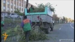 Երեւանում ծառերը խորը էտվում են