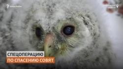 Сибиряки спасли сову и её детенышей от гибели